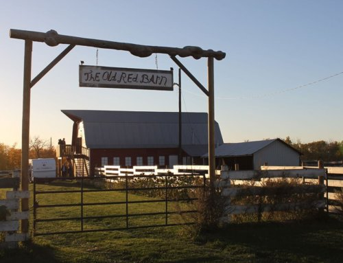 Long Table Dinner: Red Rooster Vineyard